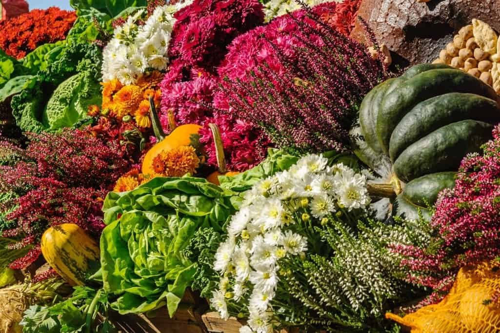 Vegetarian Ingredients
