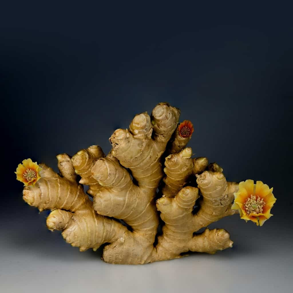 The Fresh Ginger Root